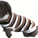 Drop fordommene og giv din hund tøj på (foto Petworld.com)